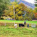 Mac's Farm In Balsam Grove 2 by Duane McCullough
