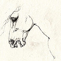 Mad Horse by Angel Ciesniarska