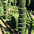 Madeira Botanic Gardens Topiary by Ros Drinkwater