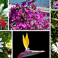 Madeiran Flower Collage by Lynn Bolt