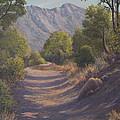 Madera Canyon by Irene Leach