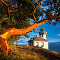 Madrone And Lighthouse by Inge Johnsson