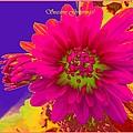 Magenta Greetings by Sonali Gangane