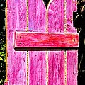 Magenta Painted Door In Garden  by Asha Carolyn Young and Daniel Furon