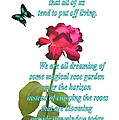 Magenta Red Rose With Butterfly And Quote by Ion vincent DAnu