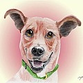 Maggie Former Shelter Sweetie by Dave Anderson