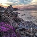 Magic Carpet In Pacific Grove by Charlene Mitchell