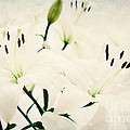 Magic Flowers by Angela Doelling AD DESIGN Photo and PhotoArt