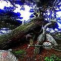 Magic Forest by Joseph J Stevens