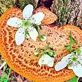 Magic Mushroom by Art Dingo