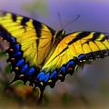 Magic Of Flight by Karen Wiles