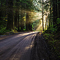 Magic Of Redwood by Vishwanath Bhat