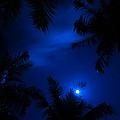Magic Of The Night Sky 1 by Jenny Rainbow