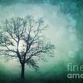 Magic Tree by Priska Wettstein