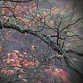 Magical Fall  by Al Campoli
