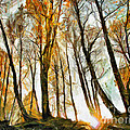 Magical Forest - Drawing by Daliana Pacuraru