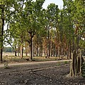 Magical Kanha by Fotosas Photography
