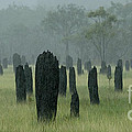 Magnetic Termite Mounds by Bob Christopher
