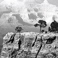 Magnificent Grand Canyon by Will Borden