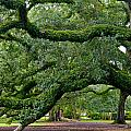 Magnificent Oak Alley Tree by Denise Mazzocco