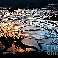Magnificent Rice Terrace by Kim Pin Tan
