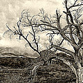 Magnificent Shoe Tree Near San Felipe Road by Ron Regalado
