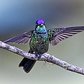 Magnificently Magnificent Hummer by Leslie Reagan -  Joy To The Wild Photos