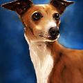 Magnifico - Italian Greyhound by Michelle Wrighton