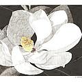 Magnolia 1 by Paul Shafranski