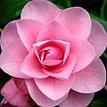 Magnolia by Amanda Stadther