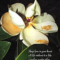Magnolia Blossom In All Its Glory - Keep Love In Your Heart by Joyce Dickens