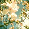 Magnolia by Cassia Beck