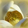Magnolia Cloud by Karen Wiles