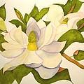 Magnolia Cluster by Lynda Evans