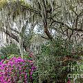 Magnolia Garden by Susan Cole Kelly
