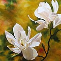 Magnolia In Spring by Alfred Ng