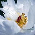 Magnolia by Lali Kacharava