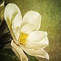 Magnolia Morning by Eric Chegwin