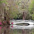 Magnolia Plantation Gardens Series IIi by Suzanne Gaff