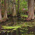 Magnolia Plantation Gardens Spring Series I by Suzanne Gaff