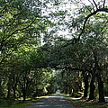 Magnolia Plantation Road by Christiane Schulze Art And Photography
