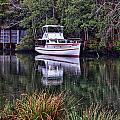 Magnolia River Cecilia by Michael Thomas
