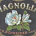 Magnolia by Studio Artist