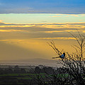 Magpie And Misty Morning Over Ireland's County Clare by James Truett
