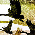 Magpie Geese In Flight by Holly Kempe