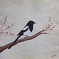 Magpie On Cherryblossm Tree by Sheela Padmanabhan