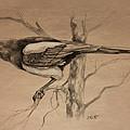 Magpie sketch