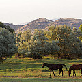 Magpies And Horses by Dana Moyer
