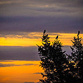 Magpies At Sunrise by James Truett