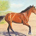 Mahogany Bay Horse In Pastel by Kate Sumners